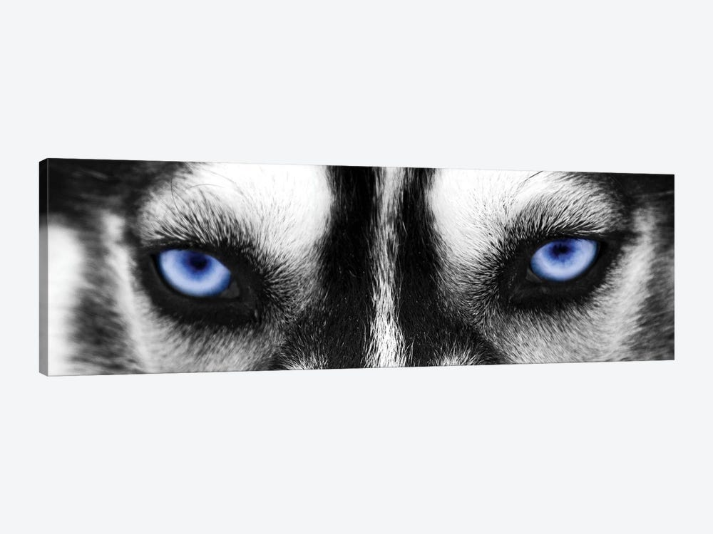Husky Eyes by PhotoINC Studio 1-piece Canvas Wall Art