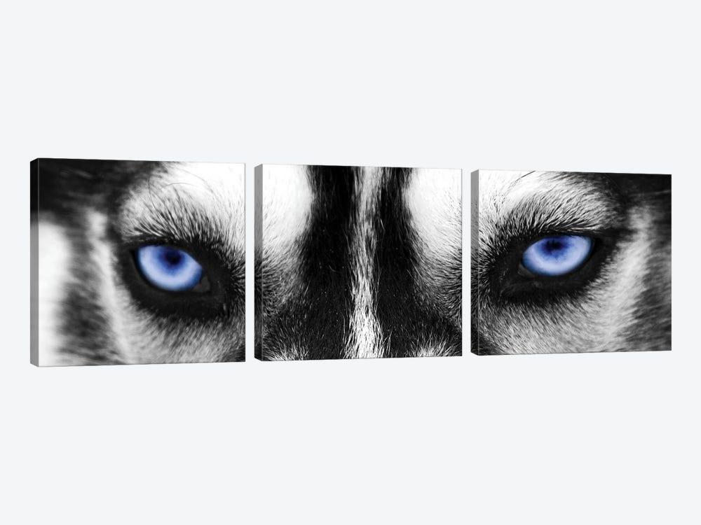 Husky Eyes by PhotoINC Studio 3-piece Canvas Artwork