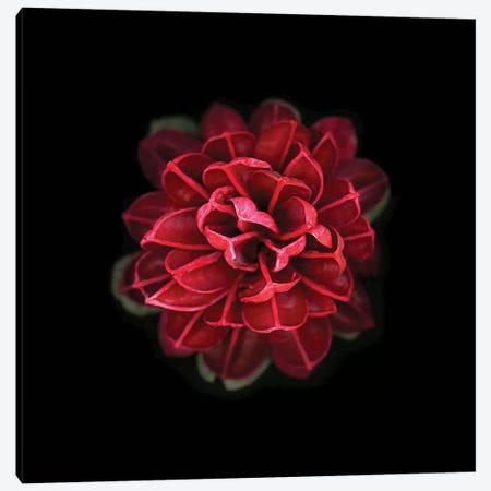 In Red Canvas Print #PIS74} by PhotoINC Studio Canvas Wall Art
