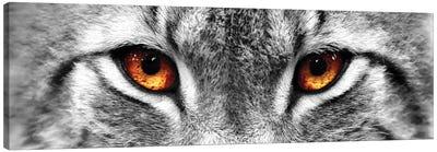 Lynx Eyes Canvas Art Print