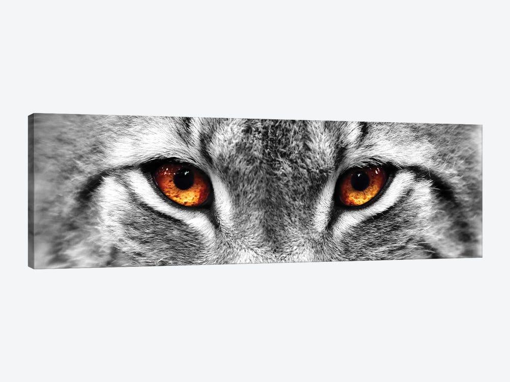 Lynx Eyes by PhotoINC Studio 1-piece Canvas Art