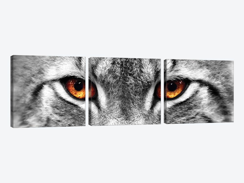 Lynx Eyes by PhotoINC Studio 3-piece Canvas Art