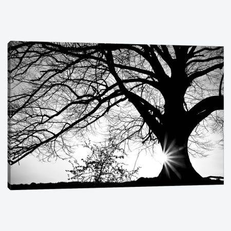 Oak Silhouette Canvas Print #PIS89} by PhotoINC Studio Canvas Art