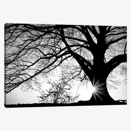 Oak Silhouette Canvas Print #PIS89} by PhotoINC Studio Canvas Art