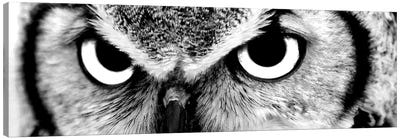 Owl Eyes Canvas Art Print