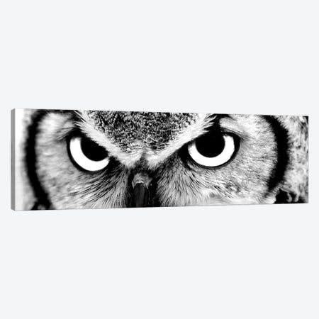 Owl Eyes 3-Piece Canvas #PIS92} by PhotoINC Studio Canvas Print