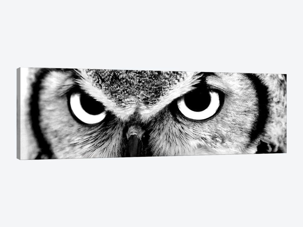 Owl Eyes by PhotoINC Studio 1-piece Canvas Art Print