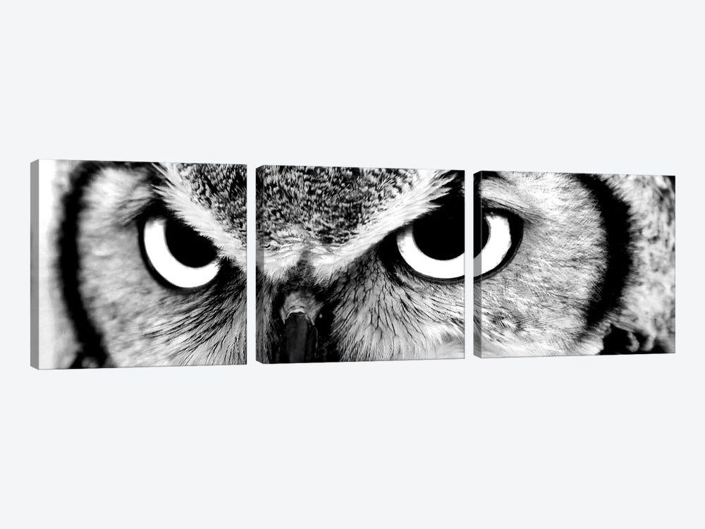 Owl Eyes by PhotoINC Studio 3-piece Canvas Art Print