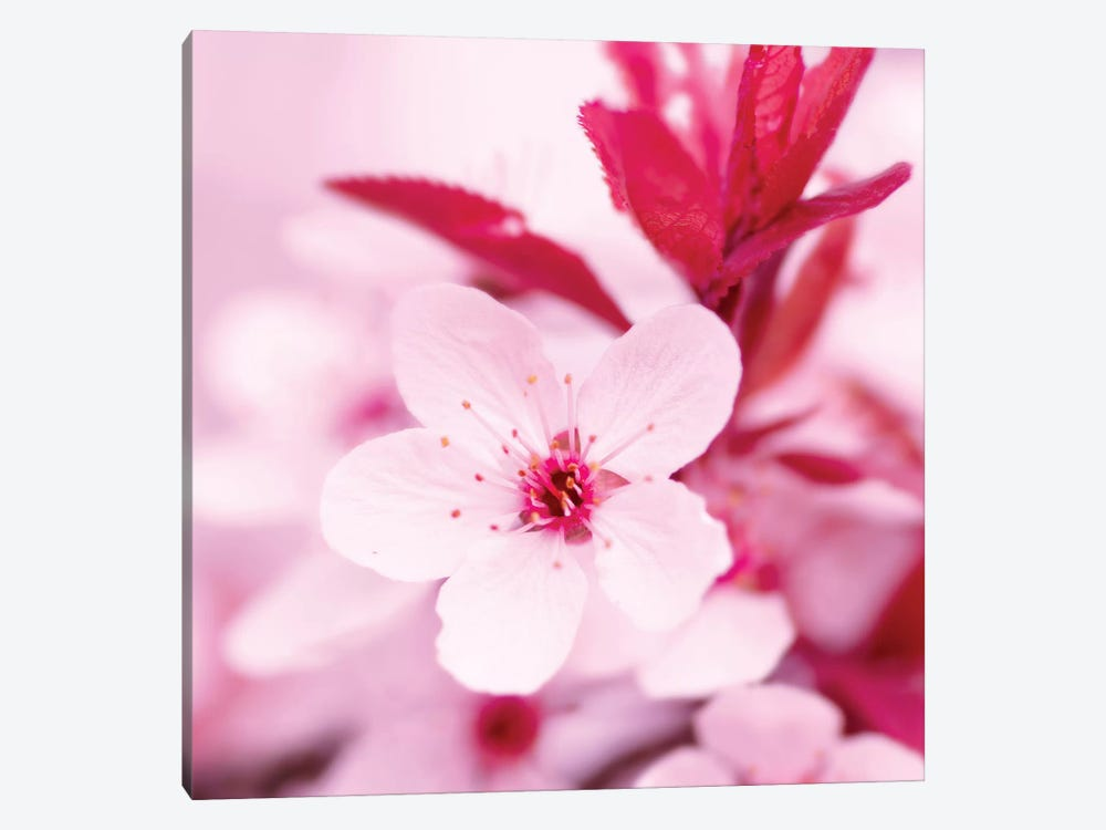 Pink Blossom I by PhotoINC Studio 1-piece Art Print