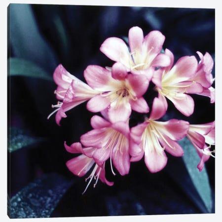 Pink Blossom II Canvas Print #PIS97} by PhotoINC Studio Canvas Wall Art