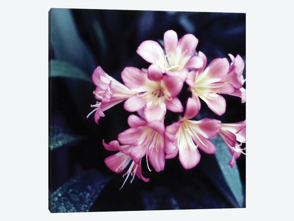 Pink Blossom II by PhotoINC Studio 1-piece Canvas Art