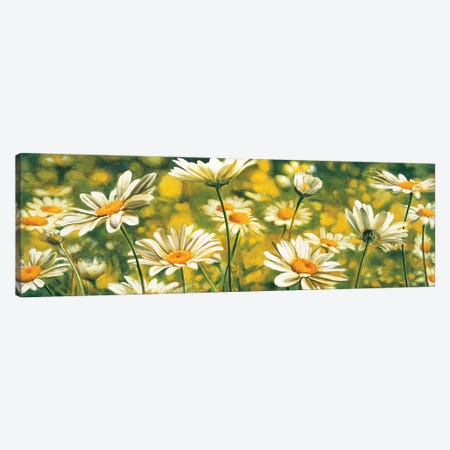 Mélodie de marguerites Canvas Print #PIV10} by Pierre Viollet Canvas Wall Art