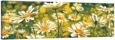 Mélodie de marguerites Canvas Art Print