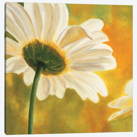 Marguerites dans le soleil I Canvas Print #PIV1} by Pierre Viollet Canvas Wall Art