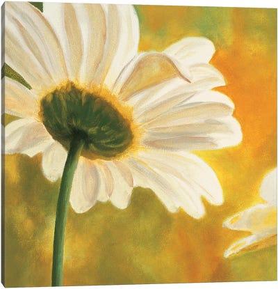 Marguerites dans le soleil I Canvas Art Print