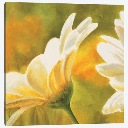 Marguerites dans le soleil 2 Canvas Print #PIV2} by Pierre Viollet Canvas Wall Art