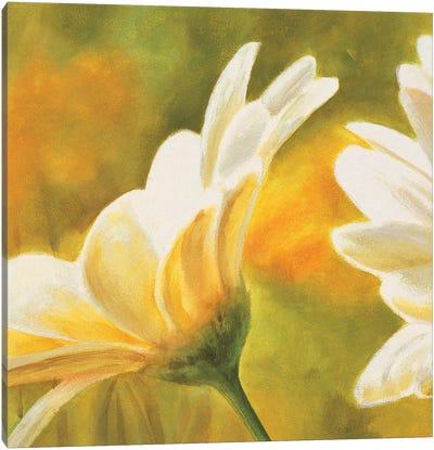 Marguerites dans le soleil 2 Canvas Art Print