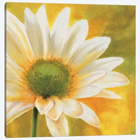 Marguerites dans le soleil 3 Canvas Print #PIV3} by Pierre Viollet Canvas Wall Art