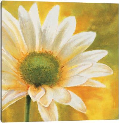 Marguerites dans le soleil 3 Canvas Art Print
