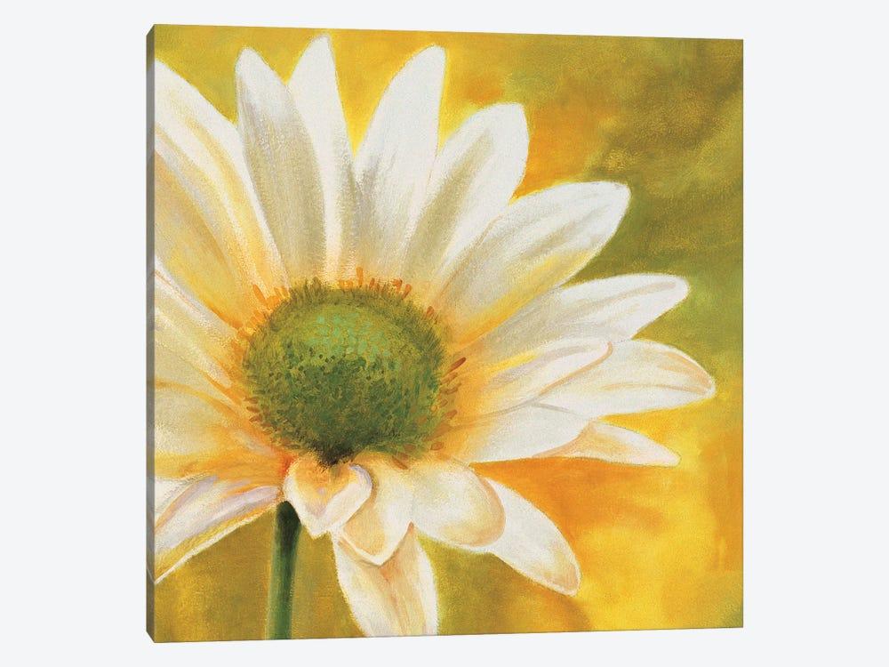Marguerites dans le soleil 3 by Pierre Viollet 1-piece Canvas Artwork
