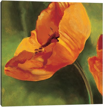 Coquelicots dans le soleil I Canvas Art Print