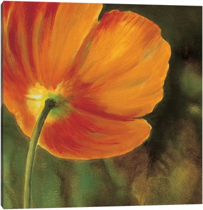 Coquelicots dans le soleil 3 Canvas Art Print