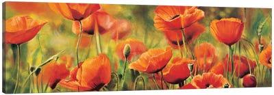 Symphonie de coquelicots Canvas Art Print