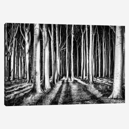 Ghost Forest Canvas Print #PIX1} by piXXelpark Canvas Artwork