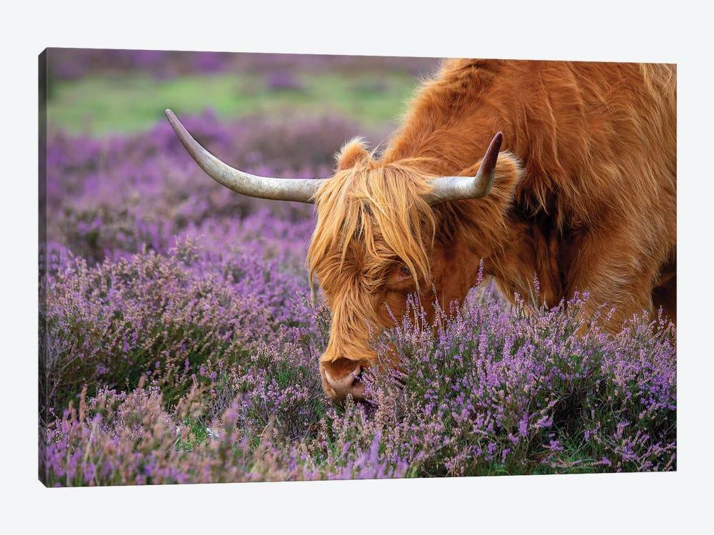 Highland Graze by Jacky Parker 1-piece Canvas Art