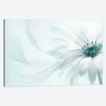Purity Canvas Print #PKR11} by Jacky Parker Canvas Print