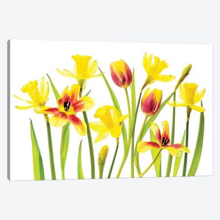 Vibrant Spring Canvas Print #PKR13} by Jacky Parker Canvas Print
