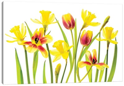 Vibrant Spring Canvas Art Print