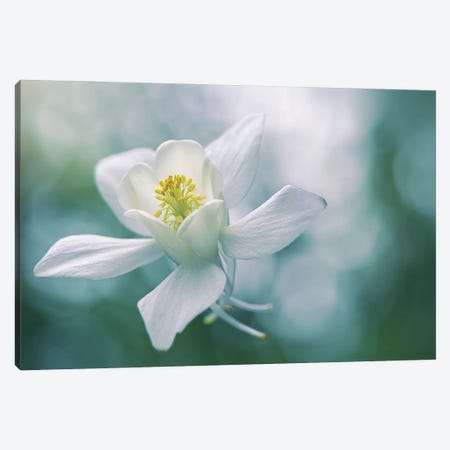 Purity Canvas Print #PKR15} by Jacky Parker Canvas Artwork