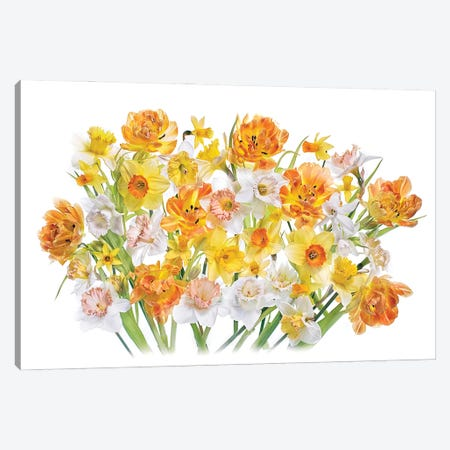 Spirited Canvas Print #PKR17} by Jacky Parker Canvas Art