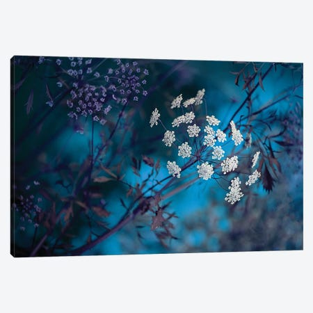 Queen Anne's Lace 3-Piece Canvas #PKR2} by Jacky Parker Canvas Wall Art