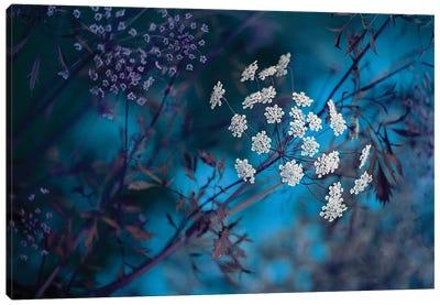 Queen Anne's Lace Canvas Art Print