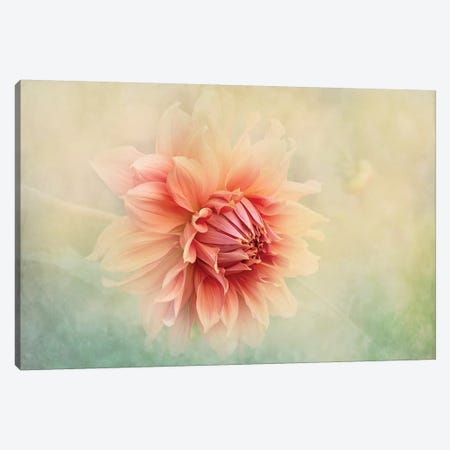 Dahlia Canvas Print #PKR5} by Jacky Parker Canvas Print