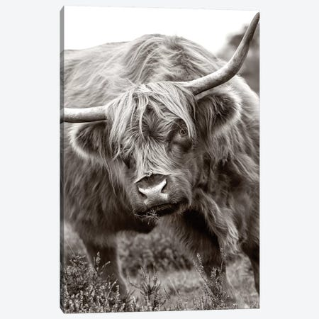 The Bull Canvas Print #PKR6} by Jacky Parker Canvas Print