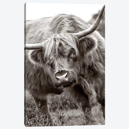 The Bull Canvas Print #PKR6} by Jacky Parker Canvas Print