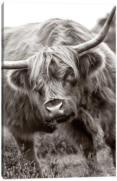 The Bull Canvas Art Print