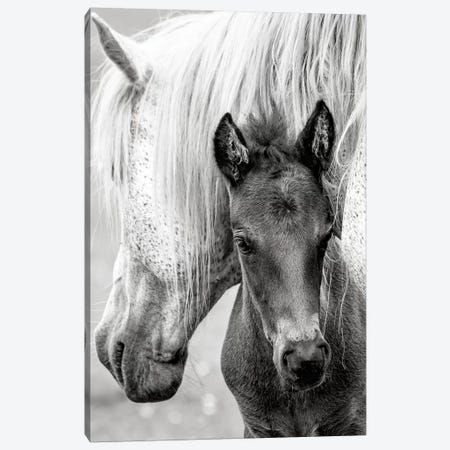 The Foal Canvas Print #PKR7} by Jacky Parker Canvas Art Print