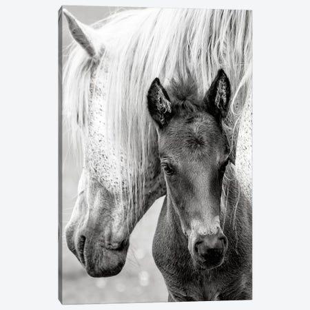 The Foal Canvas Print #PKR7} by Jacky Parker Canvas Art Print