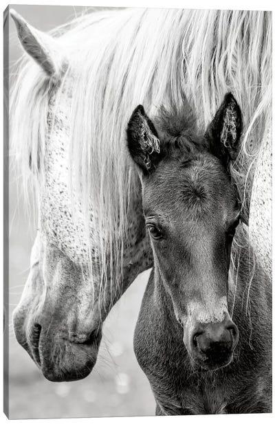 The Foal Canvas Art Print