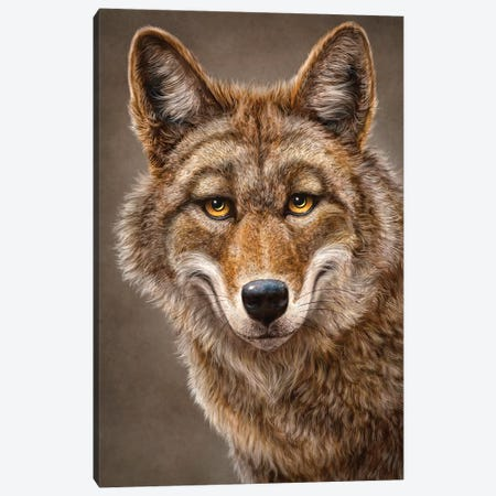 Coyote 3-Piece Canvas #PLA10} by Patrick LaMontagne Canvas Print