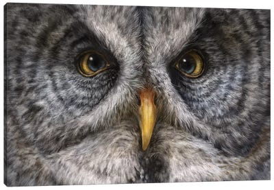 Great Grey Owl Canvas Art Print
