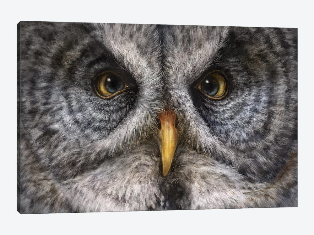 Great Grey Owl by Patrick LaMontagne 1-piece Canvas Wall Art