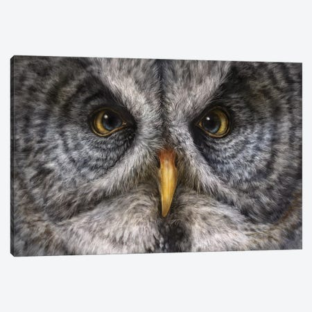 Great Grey Owl 3-Piece Canvas #PLA13} by Patrick LaMontagne Canvas Print