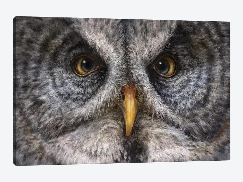 Great Grey Owl by Patrick LaMontagne 1-piece Canvas Wall Art
