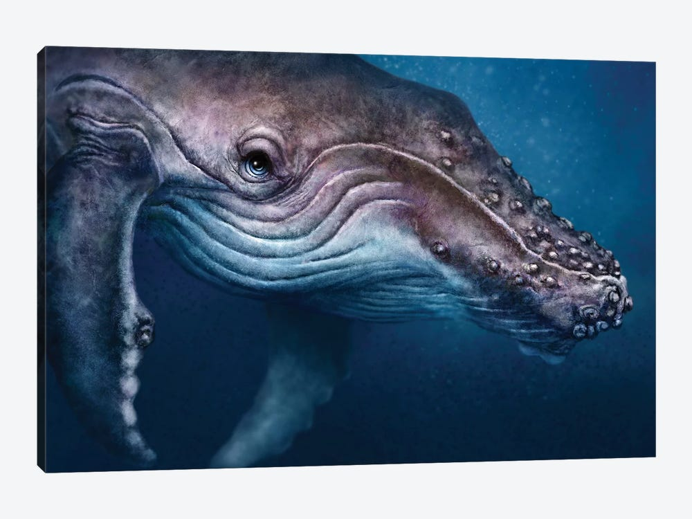 Humpback Whale by Patrick LaMontagne 1-piece Canvas Print