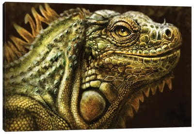 Iguana Canvas Art Print